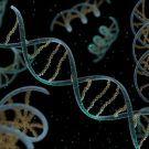 HIPÓTESIS DEL MUNDO DE ARN:el ADN necesita de proteínas para formarse y viceversa,entonces, ¿cómo se formó una por primera vez sin la otra? Se menciona que puede que el ARN sea capaz de almacenar información de la misma forma en la que lo hace el ADN, además de funcionar como enzima para las proteínas. Por ende, el ARN sería capaz de ayudar en la creación tanto de ADN como de proteínas y entonces, como indica la hipótesis del mundo de ARN, ser responsable del surgimiento de la vida…