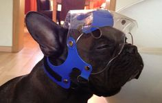 Optivizor - How To Put On and Ensure A Correct Fit - PROTECTIVE PET SOLUTIONS
