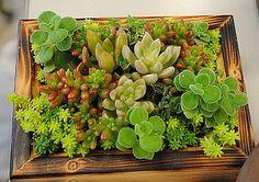 ナチュラル感のあるグリーン系。木枠でまとめると、緑いっぱいのお庭を切り取ったみたいですね。