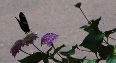 La belleza de las mariposas es el recordatorio de que todo es termina o se transfroma.
