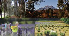 Te invitamos a pasar un día de campo con tu familia con diversas actividades: Caminata por el bosque,plática sobre la destilación de esencias naturales, visita a los invernaderos y hermosa vista al volcán...