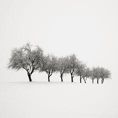 "Nine Trees- Austria by Josef Hoflehner.  Love the contrast...would like a wall dedicated to 'contrast art' in black ebony frames...""T"""