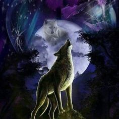 Looks like the white wolf is in the moon, the color's are beautiful Wolf Photos, Wolf Pictures, Wolf Wallpaper, Animal Wallpaper, Spiritual Animal, Wolf Artwork, Fantasy Wolf, Wolf Spirit Animal, Wild Wolf