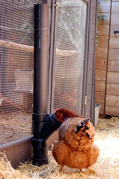 Easy PVC no spill chicken feeder. No more losing feed to chickens tossing their feed. Updated to include a little hack to prevent even more feed waste.