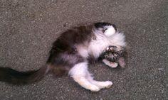 Sparoh: I think she's lost her mind.?! cute cat