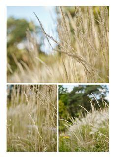 In The Garden : Grasses