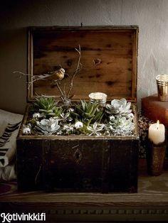 Jouluiset mehikasvit Christmas Flowers, Terrarium, Flower Arrangements, Sweet Home, Vase, Wreaths, Plants, Advent, Home Decor