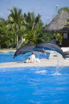 Dolphinaris Cancun  Add to trip Blvd. Kukulkan km.25 Zona Hotelera | at Wetn Wild Water Park, Cancun 77500, Mexico