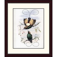 Global Gallery 'Golden-Winged Bird of Paradise' by John Gould Framed Painting Print Size: