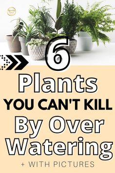 Indoor Plants Low Light, Best Indoor Plants, Cool Plants, Potted Plants, Garden Plants, Best Plants For Bedroom, Mosquito Repelling Plants, House Plant Care, Plant Species