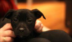 A tutti coloro che hanno un cane sarà capitato di tornare a casa e automaticamente cominciare una conversazione con lui.
