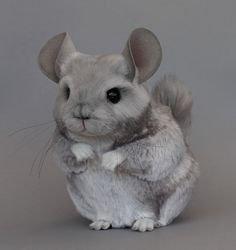 grey chinchilla by Lisa Page