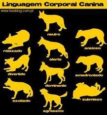 proibido cão urinar - Pesquisa Google