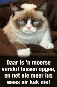 xxx Qoutes, Funny Quotes, Life Quotes, Afrikaanse Quotes, Good Morning Funny, Everyday Quotes, Funny Cats And Dogs, Twisted Humor, Grumpy Cat