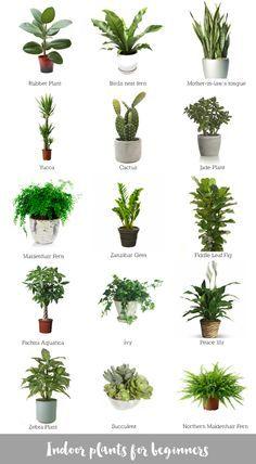 collage of awesome indoor plants #bomboracustomfurniture #blogsilove