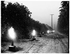 Smudge Pots in West Covina to keep the oranges from freezing. I think this was taken in the 1930s