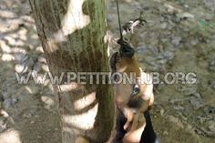 Justice For Roula! Hanged On A Hook In A Tree For 3 Days!  This dog was found hanging from a tree. She had a metal hook inserted in her nose and she was hanged on it in a tree. The dog, according to the vet, stayed there hanged for 3 days. Click for details and please SIGN and share petition. Thanks.