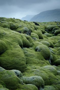 Ancient, moss-covered lava fields, Vestur-Skaftafellssysla, Iceland