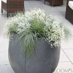 Gräser auf Balkon und Terrasse: Dekotipps für Ihr Zuhause