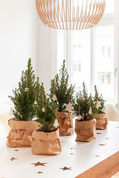 tiny spruce tops in small pots in brown bags - - cluster five on a side table or dinner table or kitchen island