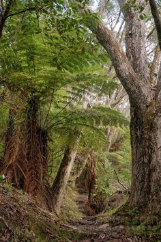 Fair Brother Loop Track, Ohope, New Zealand by Mira Smith New Zealand Houses, Tree Fern, Kiwiana, Tree Forest, South Island, Small Island, Countries Of The World, Amazing Nature, Beautiful Landscapes