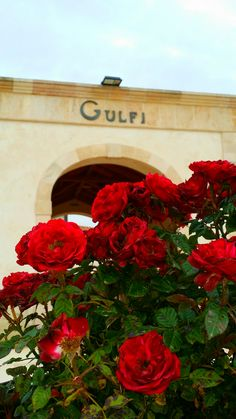 Gulfi, wine and red flowers. This is passion
