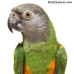 How Clean Is Your Pet Bird Cage?  The less mess in your bird cage, the better for you and your pet bird.