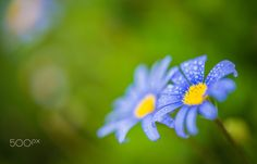 Blue Autumn Dew Drop by frederic gombert - Photo 128345711 - 500px