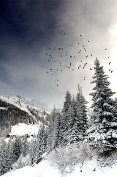 beautiful winter birds scene
