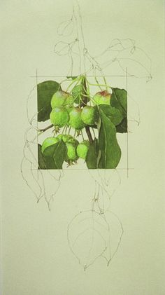 Apples Squared - S J Morris (breadth idea)