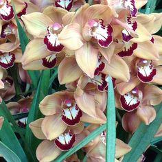 NY Botanical Garden Orchid Show...amazing!