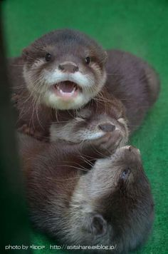 when u accidentally hit ur sibling and ur trying to comfort them before mom hears u Cute Baby Animals, Animals And Pets, Funny Animals, Baby Sea Otters, Otters Cute, Otter Love, Tier Fotos, Mundo Animal, Cute Animal Pictures