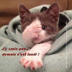 Funny cats pics humor kitty New Ideas Cute Kittens, Baby Animals, Funny Animals, Cute Animals, Crazy Cat Lady, Crazy Cats, Beautiful Cats, Animals Beautiful, Gatos Cats