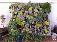 Image result for vertical gardens