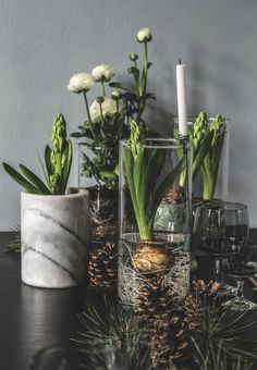 Create a lovely atmosphere with flowers and hyacinths. Style them in glass vases so the decorative roots can be seen.