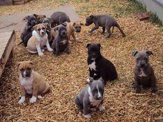 .#awe #puppies #adorable