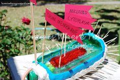 Prokaryotic Cell Model
