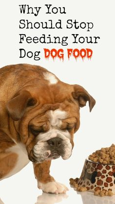 Why You Should Stop Feeding Your Dog Dog Food | www.fearlesseating.net