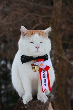 """""""Cat people are different to the extent that they are not conformists.  How could they be with a cat running their lives?"""" --Louis J Camuti"""