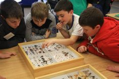 Curious? During the SMTP, Students have the opportunity to check out some of BIO's world-class specimen collection!   malaiseprogram.ca #EnvironmentalEducation  #SMTP #BIObus #Biodiversity Environmental Education, Biologist, Genetics, Programming, Opportunity, Students, Bring It On, Science, School