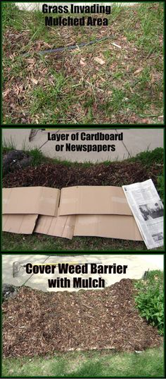 sheet mulching cardboard