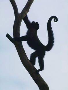 "Silhouette of a Monkey by Hobby-Photograph, Mr. ""Just one word"", via Flickr"