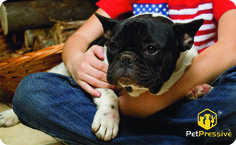 National Holidays, Pet Names, Your Pet, French Bulldog, Pets, Animals, Names Of Animals, Animales, Tax Day Deals
