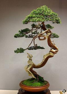 "Most popular ""Bonsai of the Day"" Juniper Bonsai by Jose Luis Blasco Paz. Very elegant Juniper Bonsai, in Literati style, breathtaking!Juniper Bonsai by Jose Luis Blasco Paz. Very elegant Juniper Bonsai, in Literati style, breathtaking! Ikebana, Plantas Bonsai, Art Floral Japonais, Juniper Bonsai, Juniper Tree, Bonsai Styles, Indoor Bonsai, Miniature Trees, Bonsai Garden"