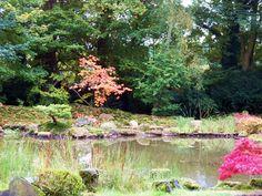 Herbst im Park des Zen Klosters in Schloss Eickhof 2015 Autumn in the Park of the Zen monastery in Castle Eickhof 2015 Japanische Ahorne und Azaleen zeigen jetzt eine weiteren schönen Seite von sich. Japanese maples and azaleas now show a further beautiful side of itself. http://www.zenkloster-in-liebenau.de/ http://www.kokeniwa.de/#home