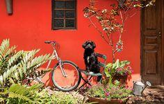 Cachorros e gatos de estimação podem comer plantas do seu jardim. Atente-se as espécies, para que não façam mal ao animal.