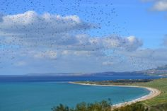 Birds, Sky and Sea http://www.scentofsicily.com/holiday-villas-for-rent-sciacca/villa-seaview-1/