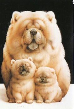 They look like live teddy bears! Chow chow family....so cute