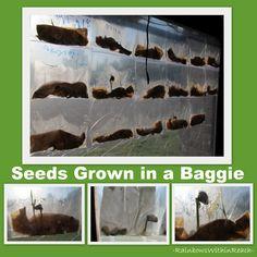 Science for Preschool, Science in kindergarten, seeds and growing