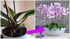 La tua orchidea ha perso i fiori e non sai cosa fare? Ecco le tappe da seguire per vederla fiorire di nuovo e dare colore alla vostra casa.